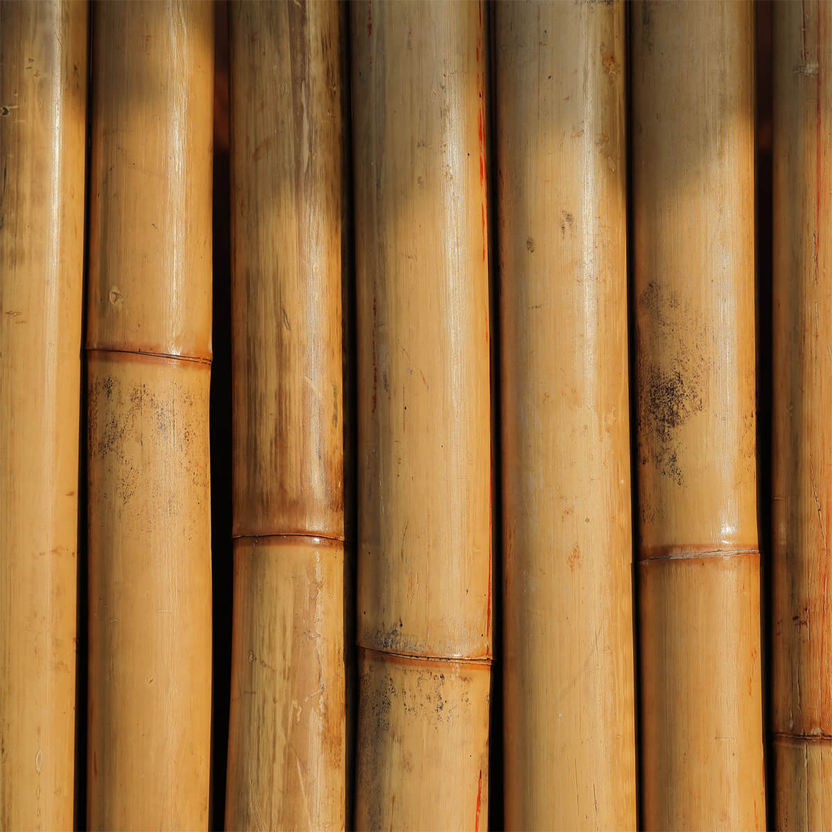 Bamboo's Uses – A Renewable Resource That Has many Uses